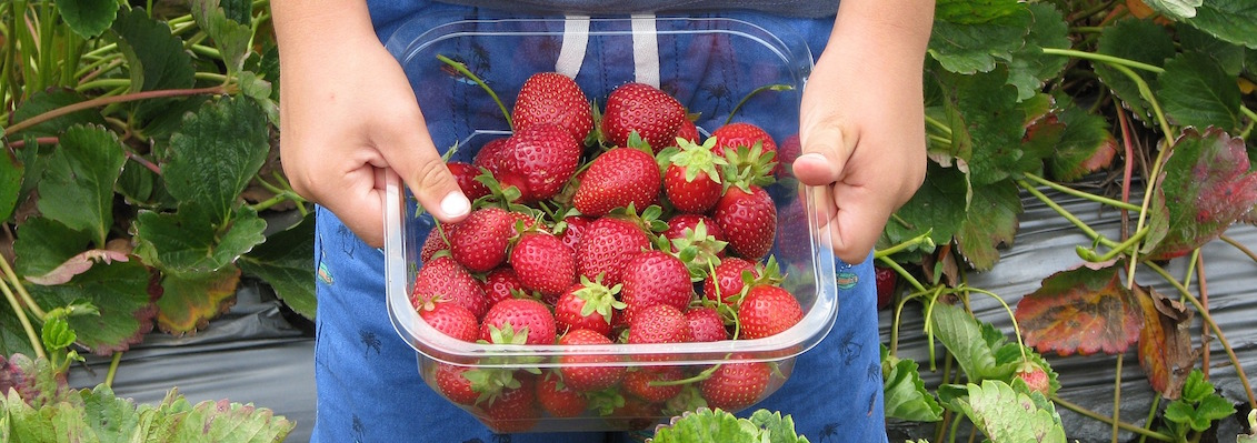 Iowa Healthiest State Farm to School - Child picking strawberries
